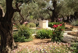 IsraelTrip-Garden-of-Gethsemane